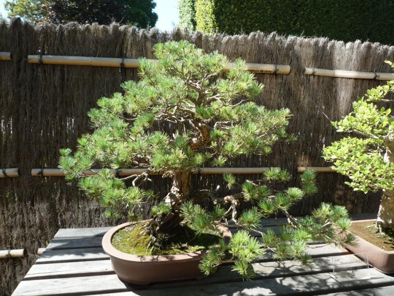 arboretum 182753P1070950