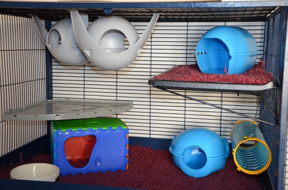 Photos de vos cages 198232DSC4109