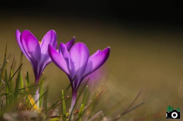 Je n'aime que toi petite fleur des champs... 200274IMG0045f25