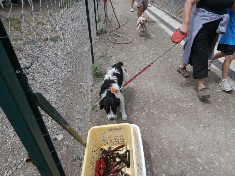 Rando' chien, seconde édition! 205960P6142776