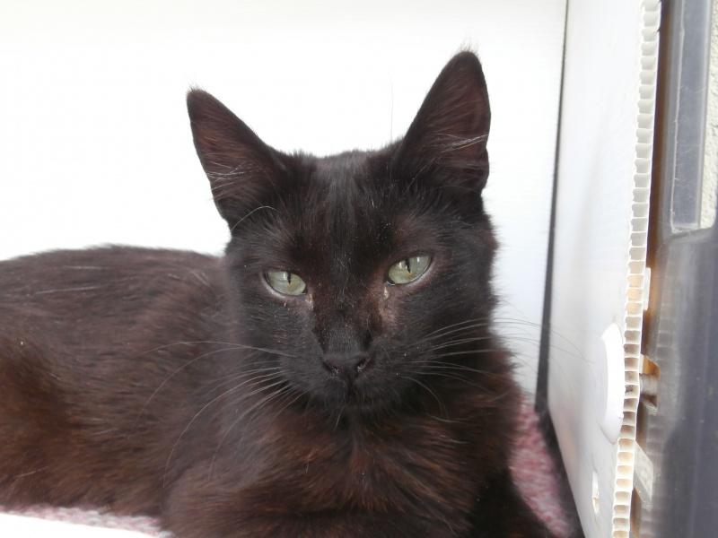 REGLISSE (chaton mâle noir) 206220P6272890