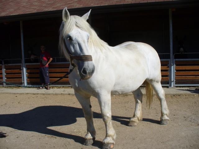 Les roulottes du berry + le pôle du cheval et de l'ane(18) 206423P1060471