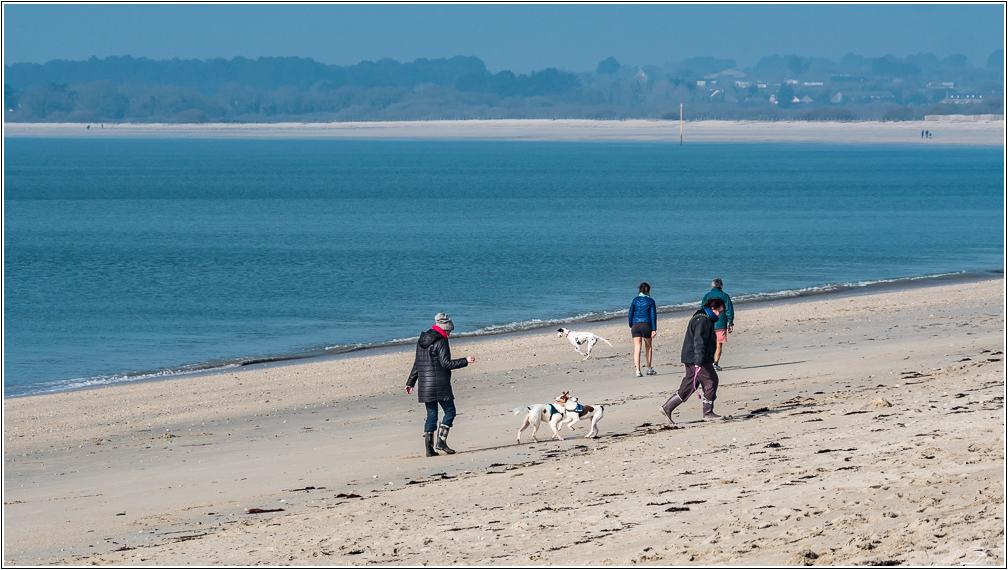 Morbihan: Suscinio, la plage 212286LR6P1410624
