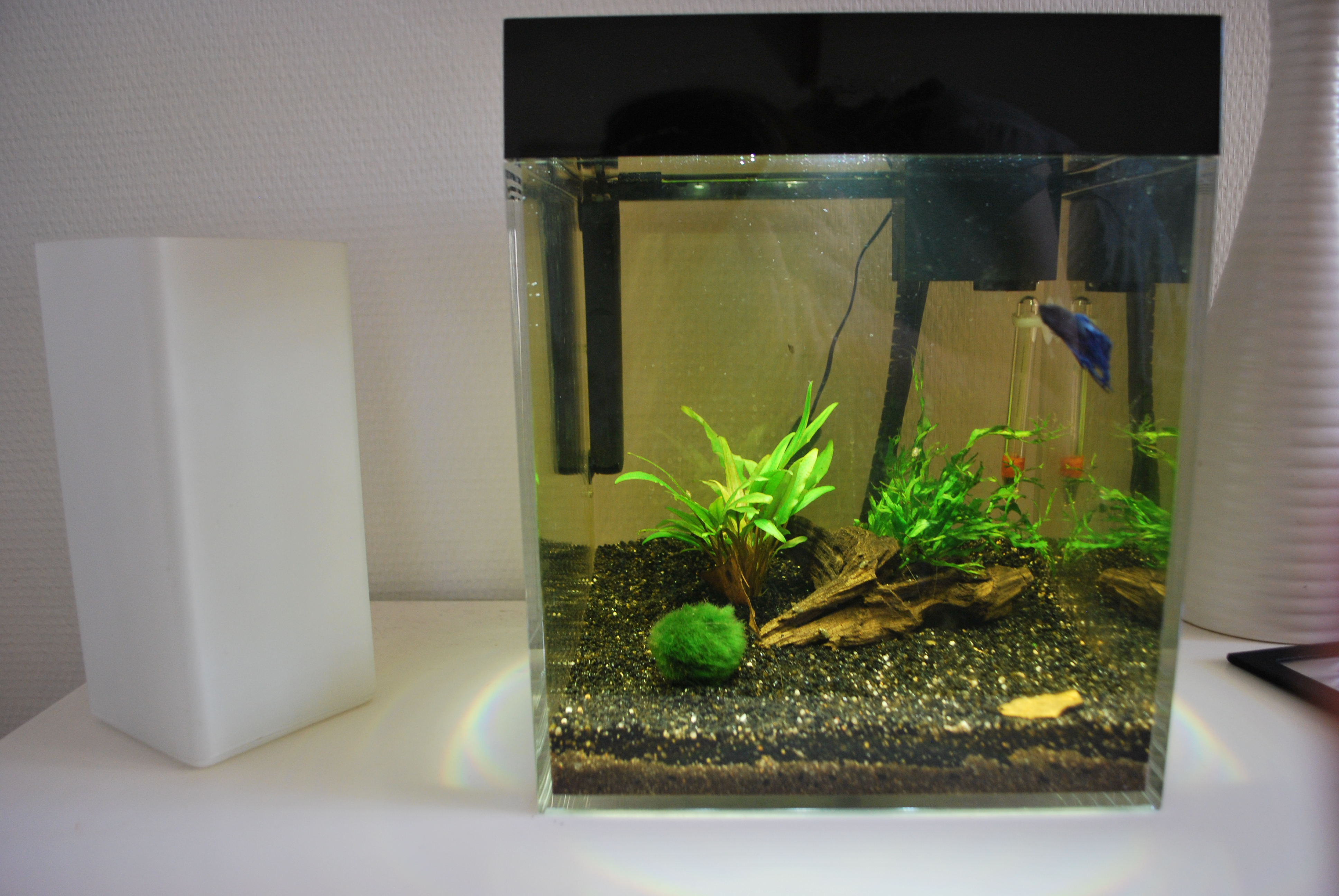 Mon premier aqua (13L) 214790DSC2466