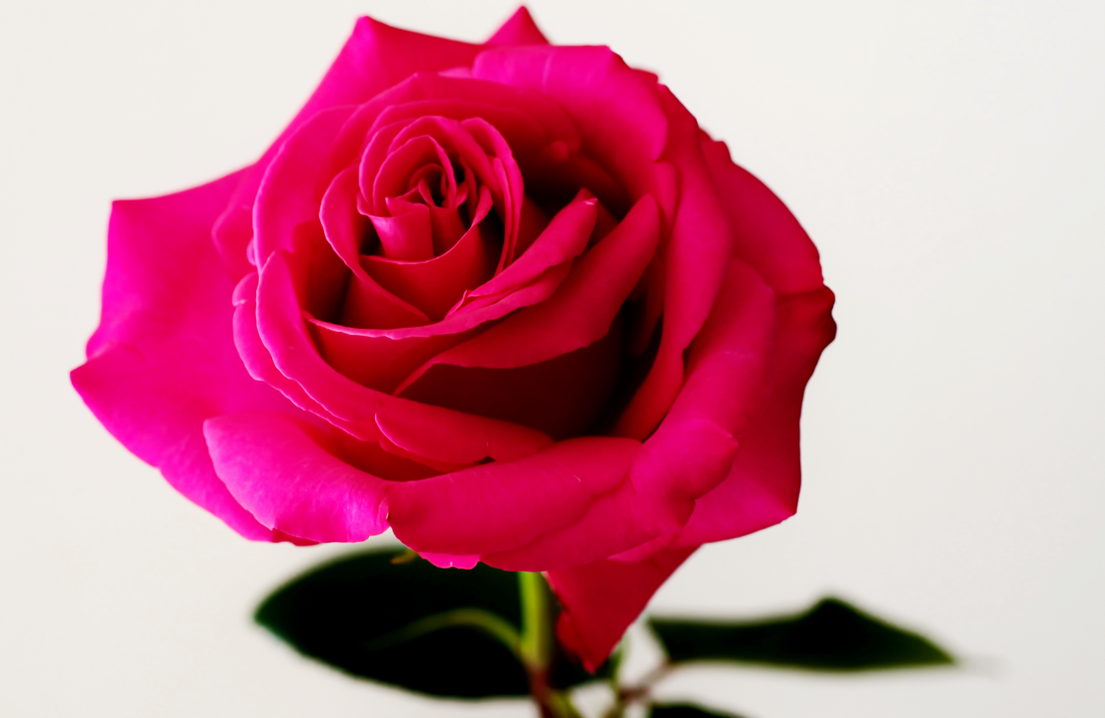 La reine des fleurs ? 217546reinedesfleurs2D300f4160s60mmISO200