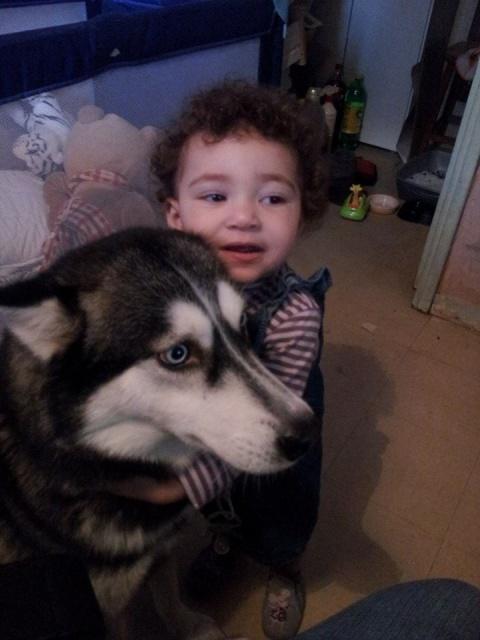 Yvi (Ayvi)     chiot husky femelle souffle au coeur ASSO:94 21908521oct14