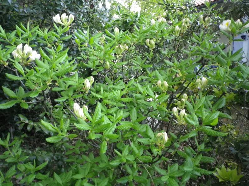 Quelques floraisons - Page 2 221225IMGP3099