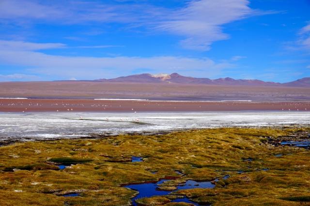 Missions scientifiques au Sud Lipez et au Salar d'Uyuni en Bolivie 225652DSC00310