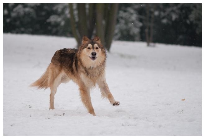 Nos loups grandissent, postez nous vos photos - Page 9 225926DSC5059640x480