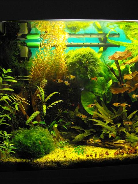 mes aquariums 226214120L3