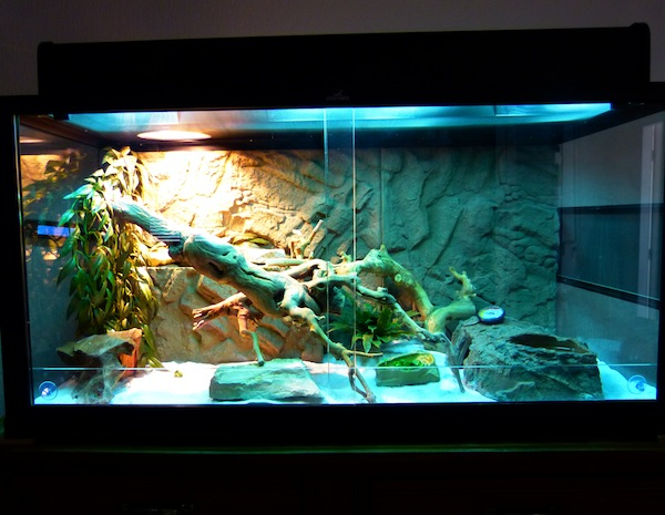 Mon terrarium et paramètres 227205P1010745