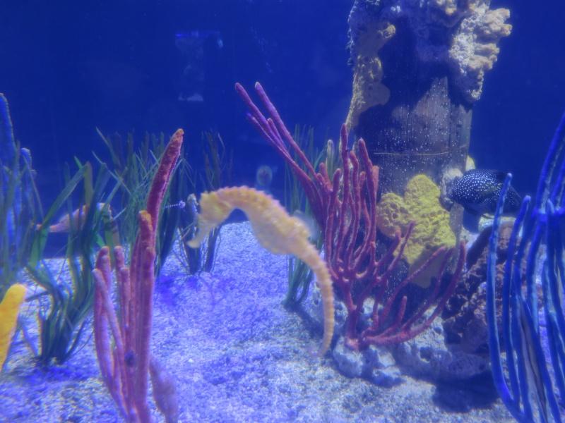 Walt Disney World + Universal Studios + Sea World + Busch Gardens Summer 2014 233817IMG0259