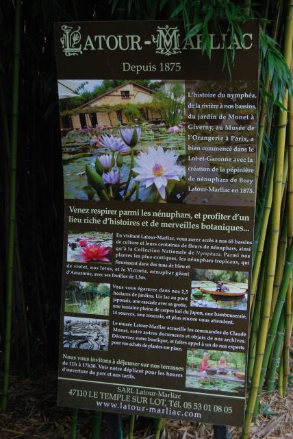 (47) Latour-Marliac, jardin de nénuphars - Le Temple-sur-Lot 236318DSC4913