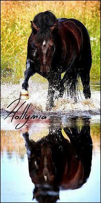 Hollymia