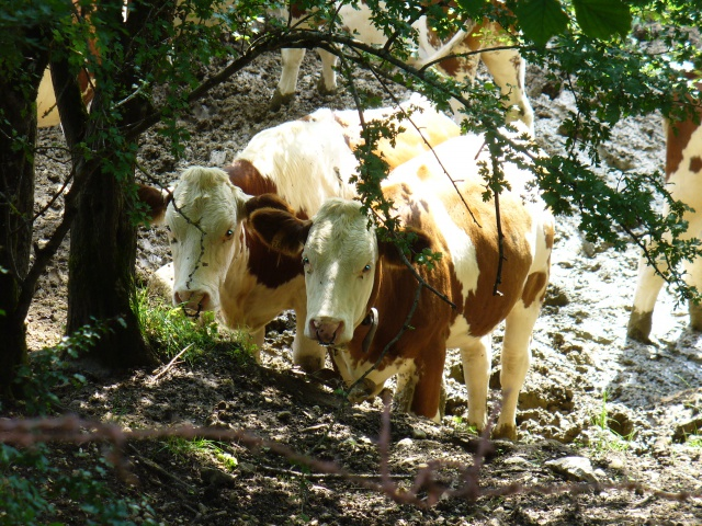 Quelques photos prises dans Le Doubs 241548P1080014