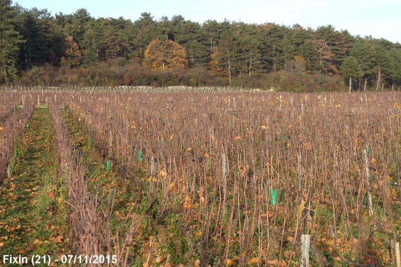 Paysages de Bourgogne Franche - Comté 244347Vignes1