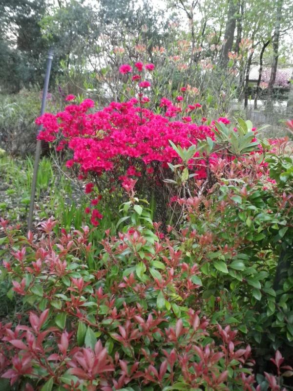 Quelques floraisons - Page 2 244513IMGP2848