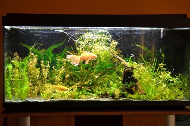Je vous présente mon aquarium! =D 252765Monaquarium