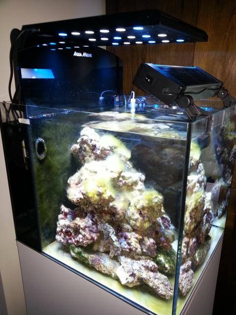 Nouveau bac 80 litres Aquamedic Blenny Advanced 26093020130623194253