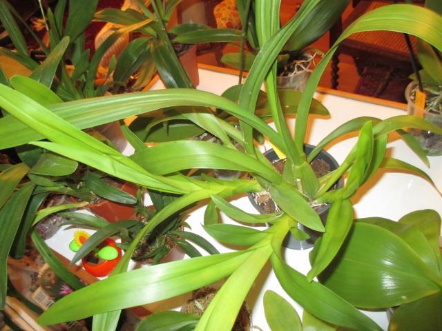 La fenêtre aux orchidées 266995IMG6258