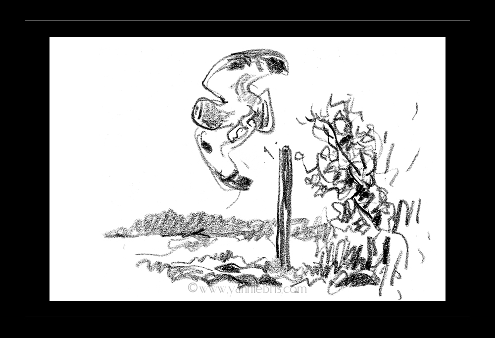 hiboux et busards dans les marais de Redon 276320HibMarais1