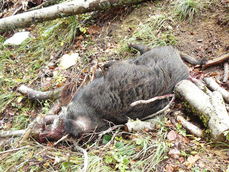 sacré week-end de chasse 276549P1070033