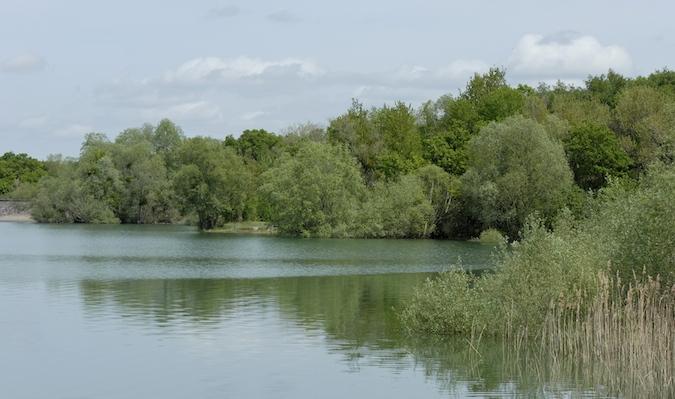 Balade au Lac du Der (51-52) - weekend du 23-24 mai 2015 - Page 3 276704DSC0054