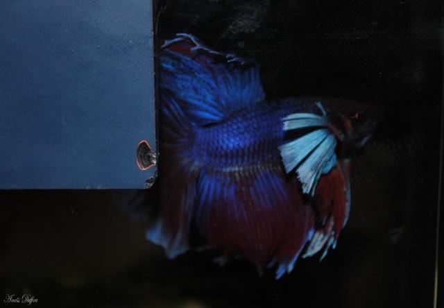 Tous mes poissons + crevettes - Page 5 279578968