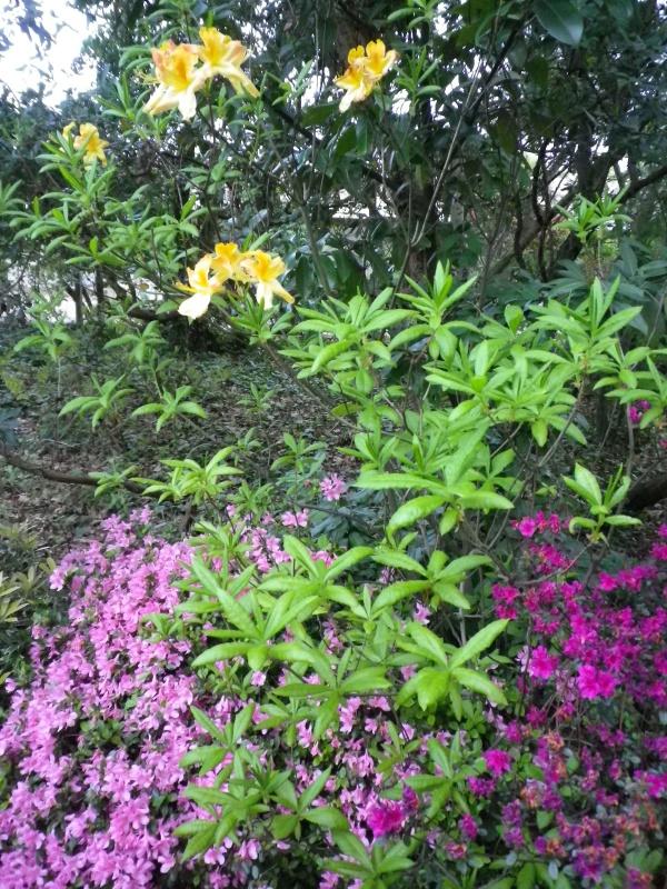 Quelques floraisons - Page 2 287823IMGP3081