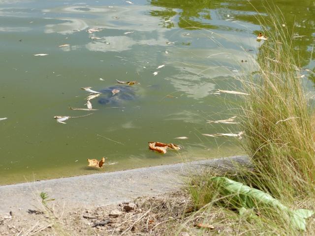 rencontre au parc Montsouris Paris 290649P1020062