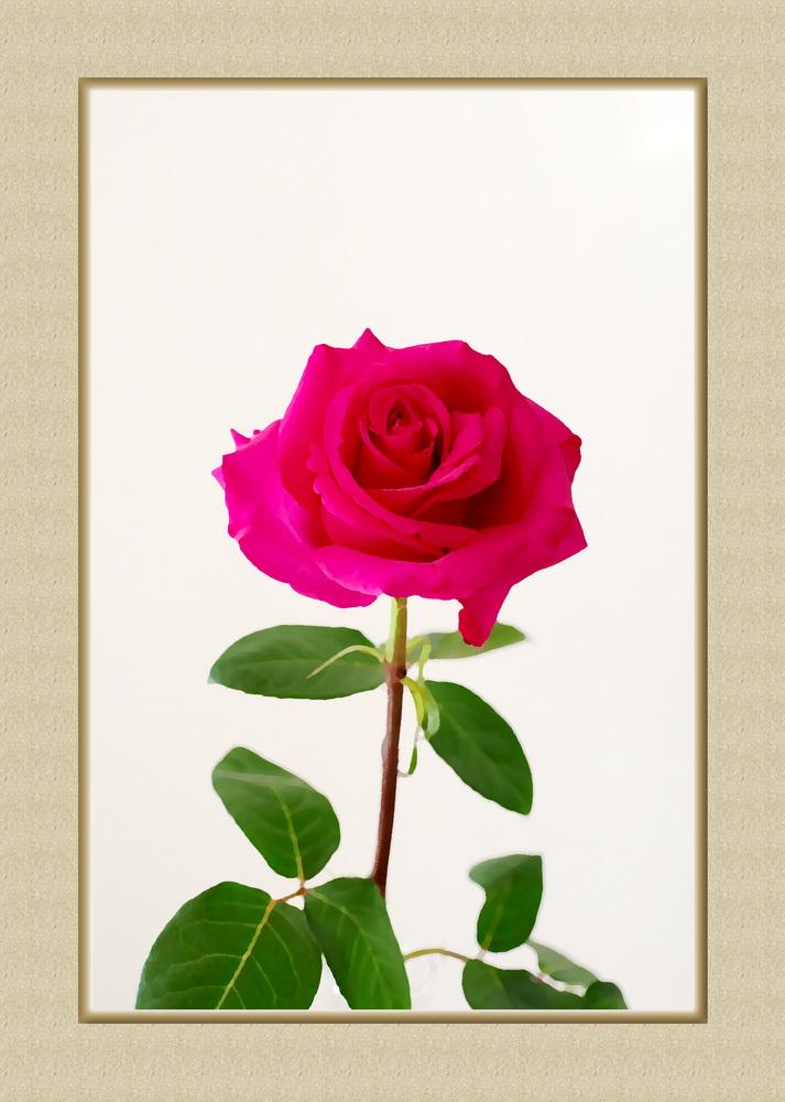 La reine des fleurs ? 295026reinedesfleurs1