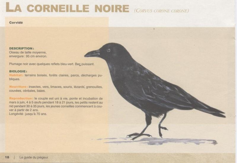corbeau et fleau  295945LaCorneille