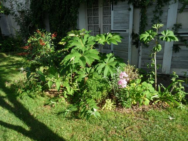 Petit jardin girondin 296302SAM2629