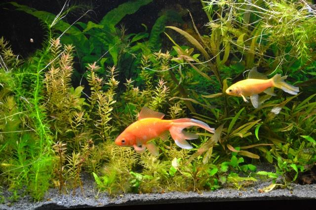 Je vous présente mon aquarium! =D 297220Mespoissons
