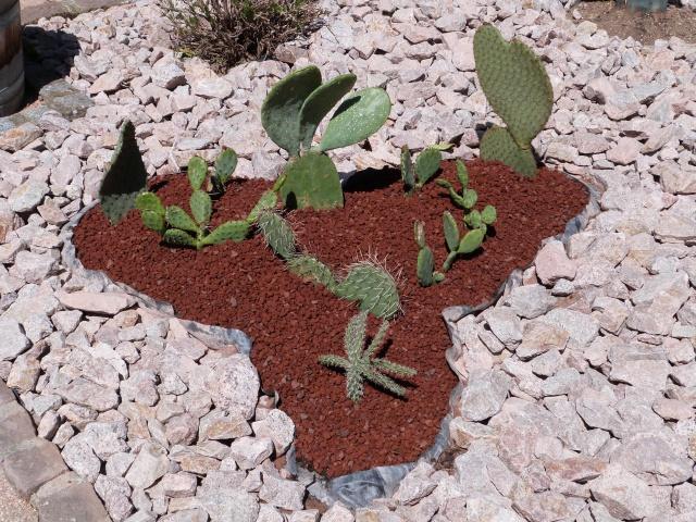 cactus 298206P1140144