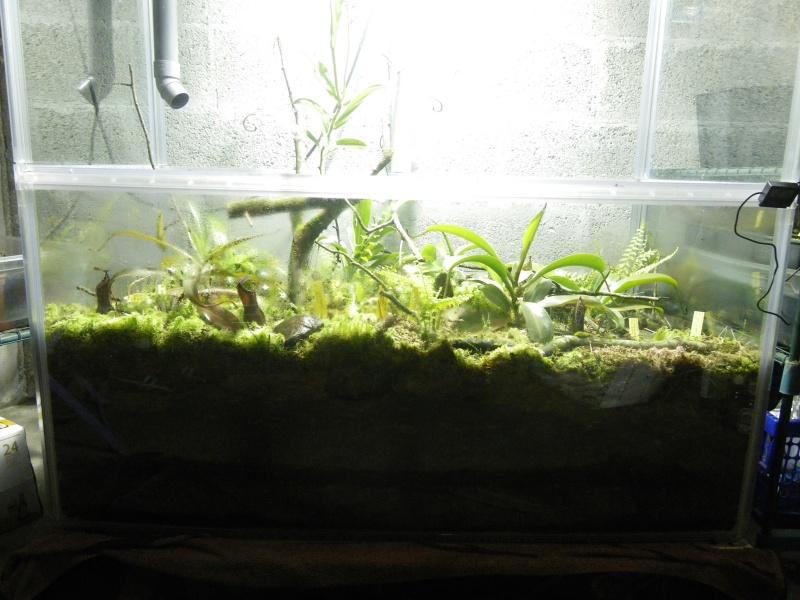 Mon terrarium highland 299835IMGP1831