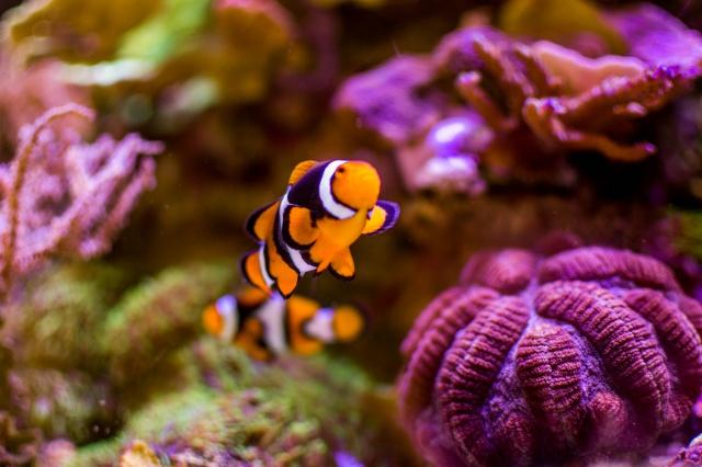 Mon premier aquarium eau de mer - Page 6 300832DSC04822