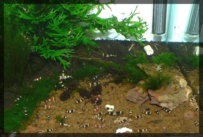 60L crevettes TWB - Page 3 301417P1310166