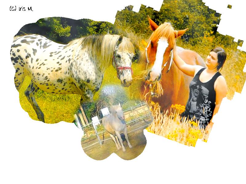 Ethologie équine