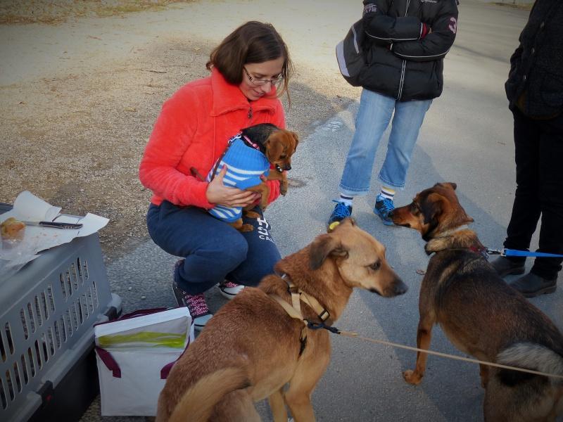 Tzupy, chien de notre quartier, mâle très sociable, né en 2009. 308043P1130400
