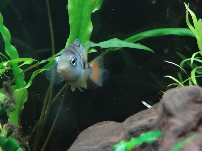 Ma Fish'étagère et les autres  - Page 3 310599DSC06946