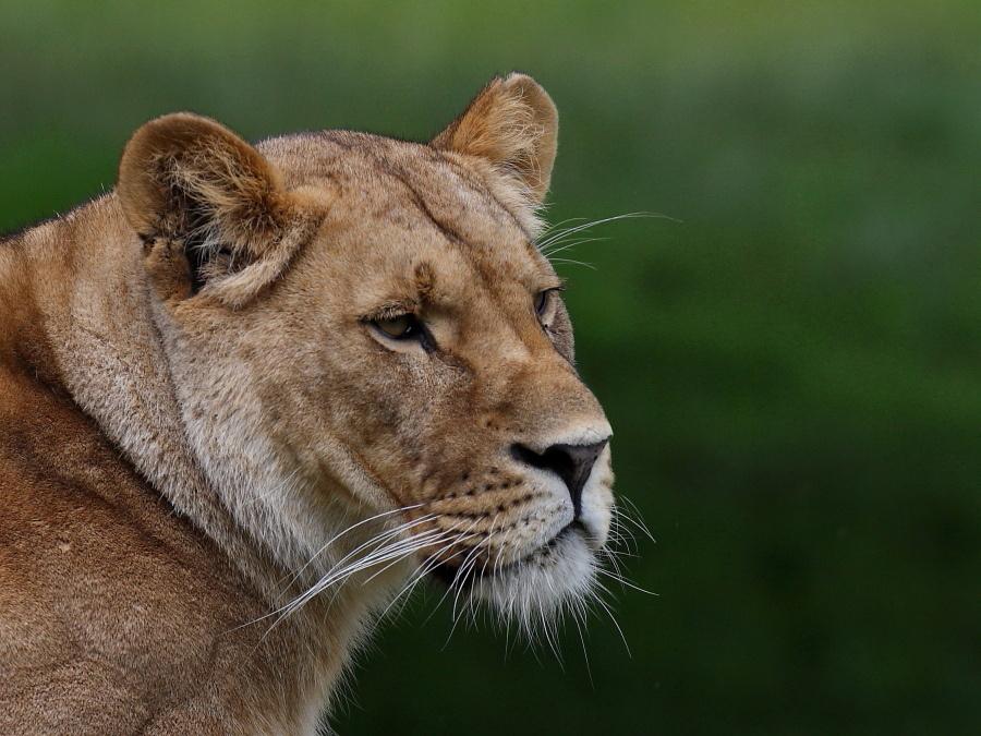 Sortie au Zoo d'Olmen (à côté de Hasselt) le samedi 14 juillet : Les photos 3125150121900