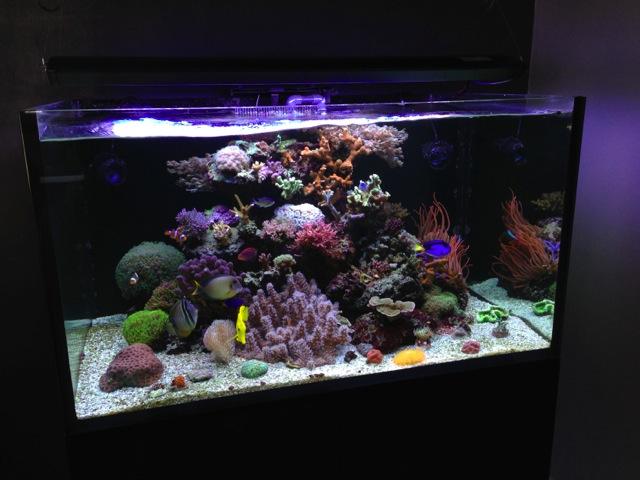 Mon SuperFish Home 25 314624IMG0012