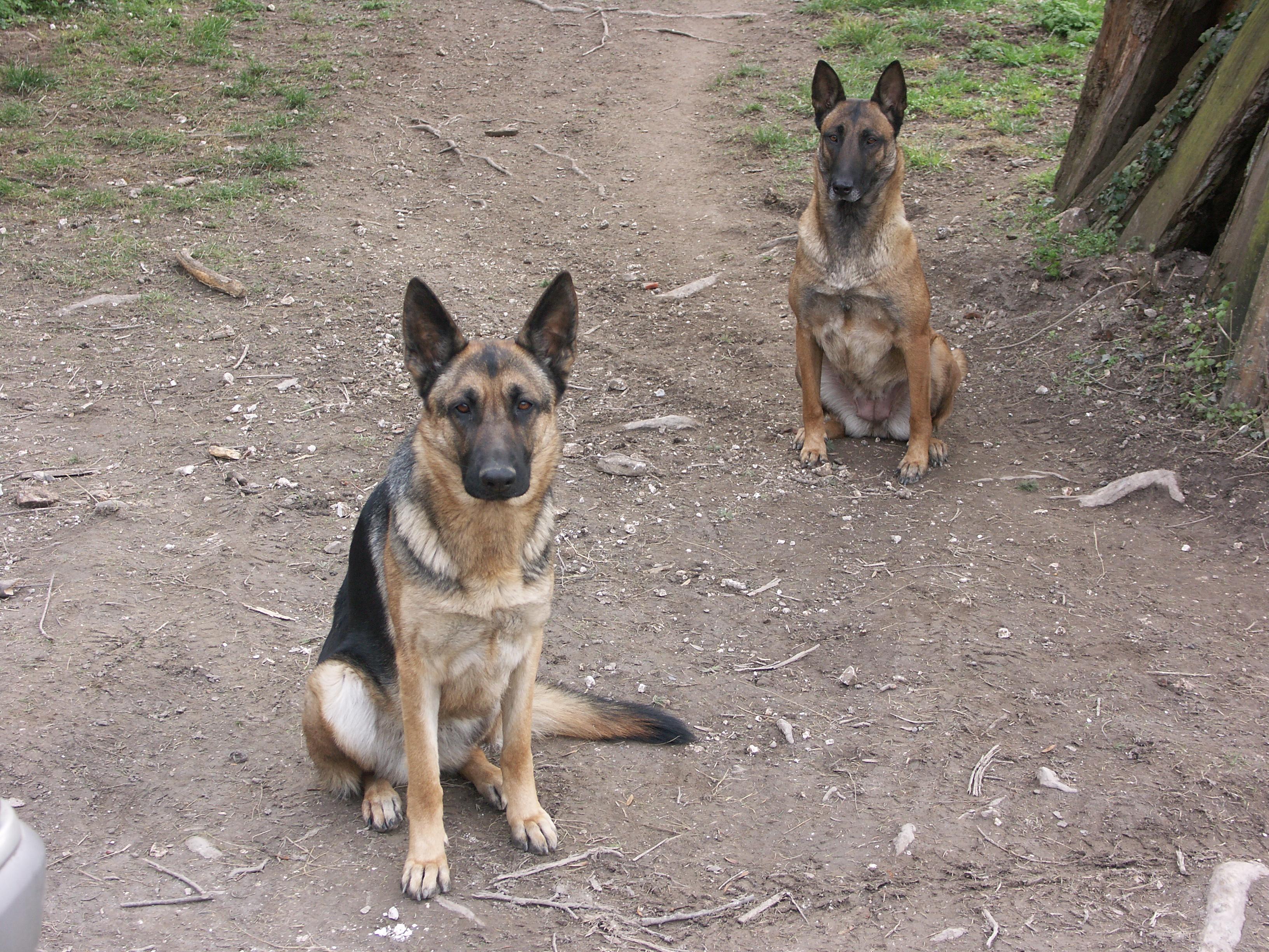 mes deux chiennes vont mourir... - Page 4 31567820050218001ScaryUlna
