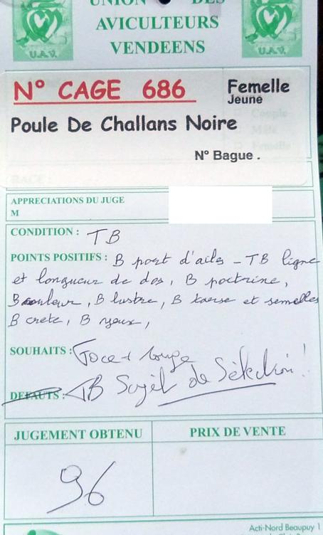 Poule de Challans - standard 315785P1120157