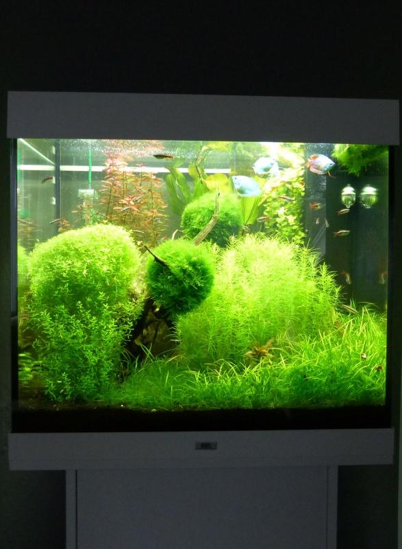 Juwel Lido 200 (Asiatique) - Daytime LED 80w - JBL i1501 - Page 4 319219P10308381