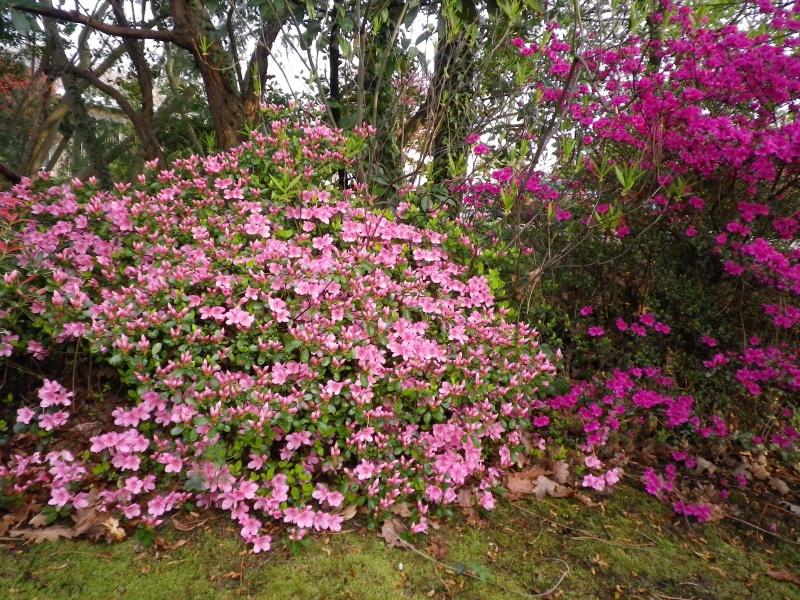 Quelques floraisons - Page 2 321175IMGP2789