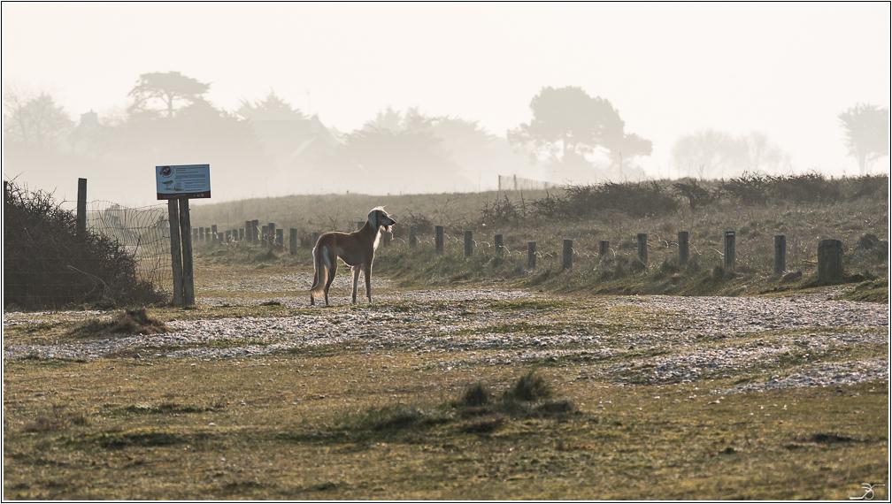Morbihan: Suscinio, la plage 321249LR6P1410442