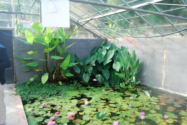 (47) Latour-Marliac, jardin de nénuphars - Le Temple-sur-Lot 323707DSC4932