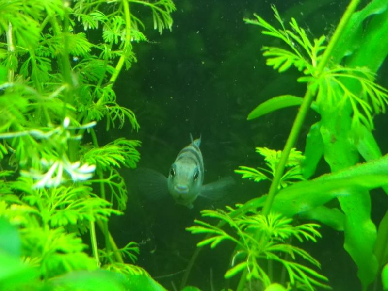 Ma Fish'étagère et les autres  - Page 2 324781DSC06953